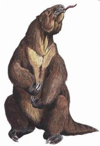 Mapinguari is maybe a giant ground sloth.